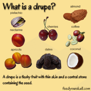 4 Fun & Tasty Ice Cream Toppings. What is Drupe? A Drupe is a flashy fruit with skin and a central stone containing the seed. Spoonabilities.com