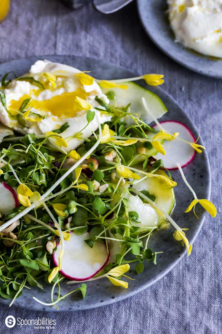 Champagne Mustard Vinaigrette is the salad dressing for this fresh Yellow Pea Shoot Salad with micro arugula, red radishes, zucchini, and hazelnut. Spoonabilities.com