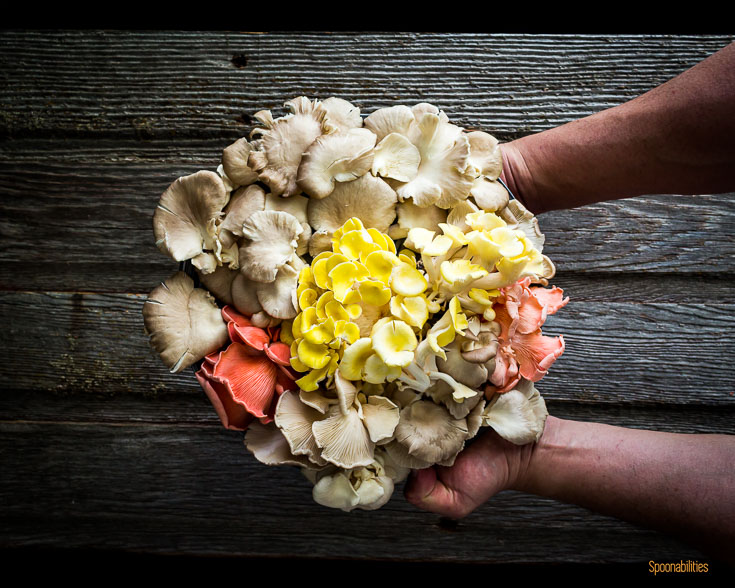 My hands holding a mixed Oyster mushrooms bouquet. Spoonabilities.com