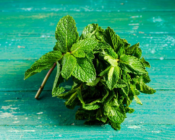 bunch of fresh mint sprigs on a green background